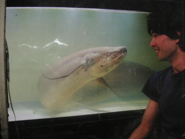homem vs peixe